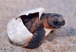 nature as the baby turtles hatch